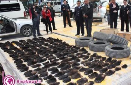 محموله قاچاق عجيب در چين