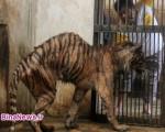 باغ وحش سورابایا جهنمی برای حیوانات+۸عکس