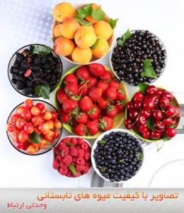 گزارش اختصاصی بینانیوز: نگاهي به مشکلات برداشت و فروش ميوه در آذربايجان غربي