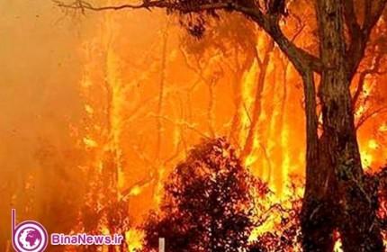 تدوام دود و آتش در جنگلهای ایران و کوتاهی مسئولان