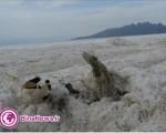 آخرین وضعیت دریاچه اورمیه,۷۰ درصد مساحت دریاچه کاسته شده