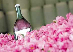 رفع عطش روزهداران با بوییدن و اسپری کردن گلاب