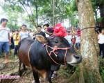 رسم عجیب برای قربانی کردن گاو در چین+۴عکس