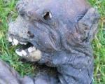 کشف جسد یک موجود فضایی در آفریقای جنوبی+ ۵عکس