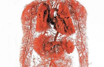 اولين ماكت ساخته شده سيستم انتقال خون بدن