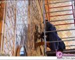 نصب کتیبه ایرانی بر ورودی ایوان طلای امیرالمومنین(ع) +۷عکس
