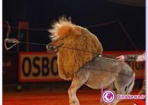 اسبي که شير شد+تصاویر