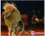 اسبی که شیر شد+تصاویر