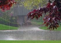 باران 1500 اهوازی را روانه بيمارستان کرد