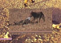 """جبهه """"النصره"""" اجساد قربانیان را به سگها میدهد + عکس"""