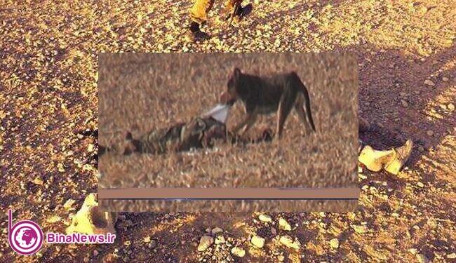جبهه النصره اجساد کشته شدگان را به سگها میدهد