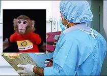 آخرین وضعیت «فرگام» دومین میمون فضانورد ایران