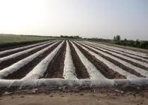 رشد 60 درصدی پرداخت وام به کشاورزان اردبیلی،نسبت به سال گذشته