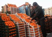 ورود پرتقال انباری از 5 روز دیگر به بازار
