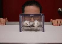 بوی مردان موشهای آزمایشگاهی را دچار تنش میکند