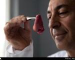 پرورش اندام سفارشی در آزمایشگاه با دستاورد پیشگامانه دانشمند ایرانی
