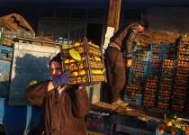 سیب زمینی 20 روز دیگر ارزان میشود/ پرتقالهای مصری بازار را قبضه کرد