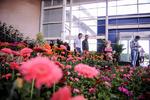 مرکز تولید گل و گیاه در نیشابور راهاندازی میشود