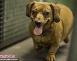 کمپ لاغری حیوانات چاق خانگی در آمریکا/ تصاویر