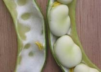 مصرف گل باقلا در دفع سنگ کلیه موثر است