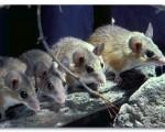 حیواناتی که اعضای بدن آنها مجددا رشد میکند