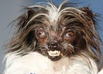 زشتترین سگ جهان رکورد زد +عکس