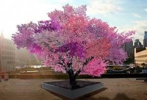 درختی که 40 نوع میوه میدهد + عکس