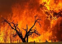 ۳۰ هکتار جنگل در آتش سوخت