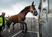 درپی حواشی واردات اسبهای گرانقیمت ، واردات اسب فعلا متوقف شد