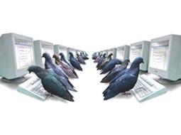 الگوریتم کبوتر و افت رتبه در گوگل، چه معنایی دارد؟