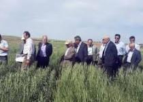 راهکار وزارت کشاورزی برای کاهش مصرفآب