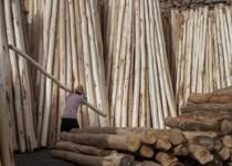 صادرات چوب آزاد شد