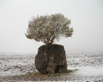 عجیب ترین درخت ایران /عکس