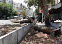 جریمه قطع درختان در تهران اعلام شد