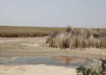 """وزارت نفت آب تالاب """"هورالعظیم"""" را باز کرد"""