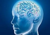 مغز بزرگتر با طول عمر ارتباط دارد؟