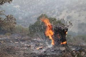 آخرین جزئیات آتشسوزی جنگلهای ایلام