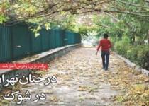 برگریزان زودرس آغاز شد /درختان تهران در شوک
