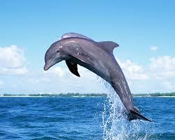 دلفین جاسوس اسرائیل دستگیر شد!
