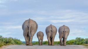عکسهای برگزیده مسابقه عکاسی حیات وحش