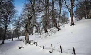 بارش بی سابقه برف در جنوب شرق ايران