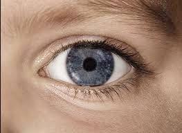 گام جدید دانشمندان در درمان نابینایی